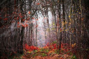 Forest place 2 by Euphoria59