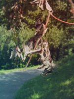 Withered leaves by Luczynka