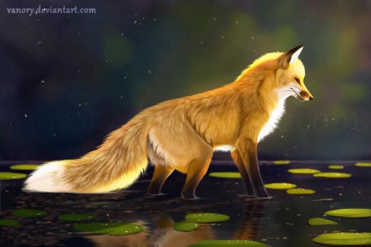 Attentive Fox by Vanory