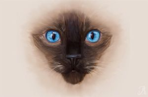 Siamese by Sheppard56