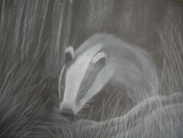 Badger - Conte by Neila078