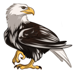 Piebald Eagle by TokoTime