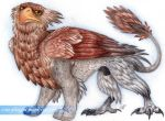 Gryphon by Crazy-Dragon