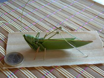 palm leaf grasshopper by orsobrusco