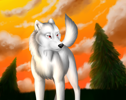 White Wolf by 5898laura