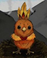 Pocket monsters evo Torchic