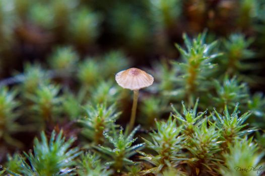 Giant Mushroom in a Tiny Forest by Kdv42