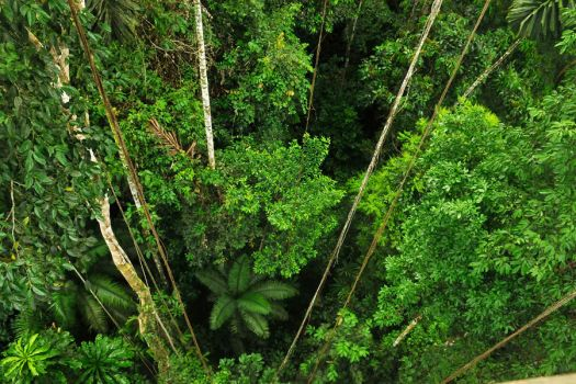 Amazon jungle below by wildplaces