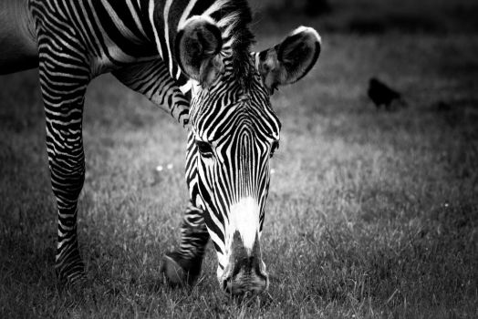Chester Zoo 06 by funknhell