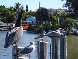 3 Pelicans and 2 Gulls on Sticks by carriehowarth