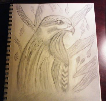 Red tailed hawk by Kylee-DC
