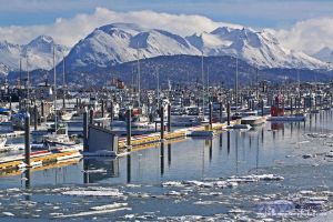 Homer Harbor by MSimpsonPhotos