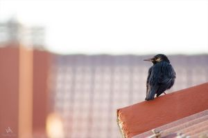 Bird on a roof by VitoDesArts
