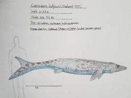 Maastricht formation: Carinodens belgicus by paleosir