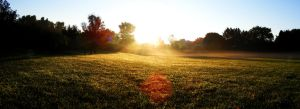 Morning Meadow by ToryHartley
