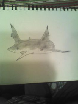 great white by Sharklover74
