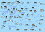A Guide to Rodent Phylogeny by Albertonykus