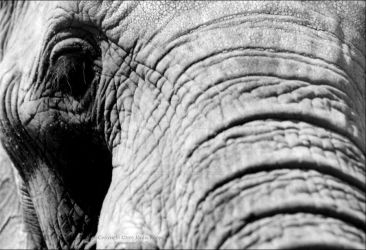 An Elephant Portrait by somnambulistic