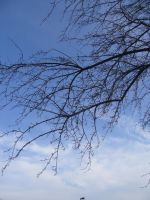 Branches and Sky by dull-stock