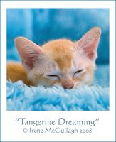 Tangerine Dreaming by substar