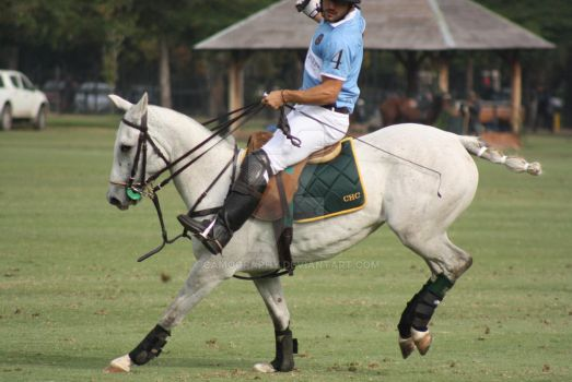 Polo pony stock  by camography