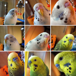 The Many Feathered Faces by PhantomNayru