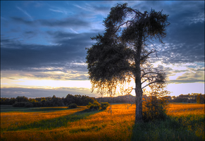 The Light Across the Field by wb-skinner