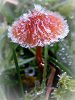 Fungi on Ice by Iris-cup