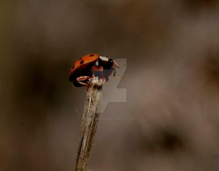 Ladybird by Naturesview