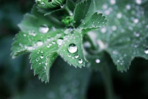 waterdrops by burn-the-remembrance