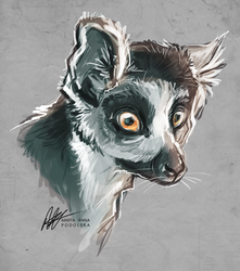 Lemur by ISHAWEE