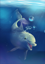 Bottlenose Dolphin by Cindacry