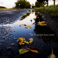 The Autumn has come pt.2 by PavelFireman