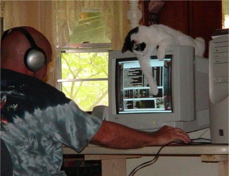 cat playing with computer by dovestock