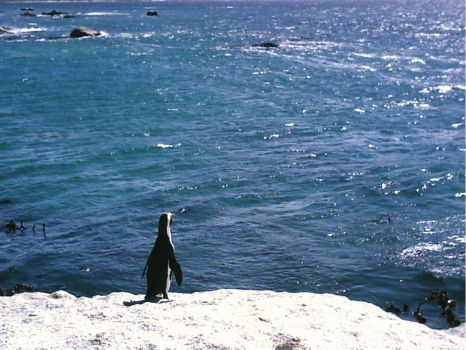 Penguin admiring the water by emmaclairemercedes