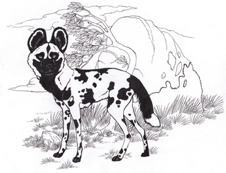 African Wild Dog by Forbidding