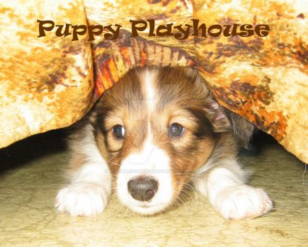 Puppy Playhouse by southwesternscenery
