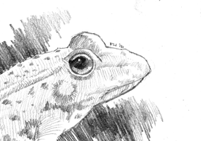Ribbit - Pencils by Daystorm