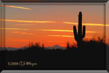 Cactus Sunset by e-CJ