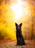 Colors of fall by Wolfskuss