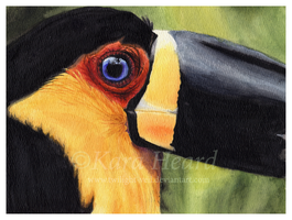 Watercolor Toucan by Twilight-Veil