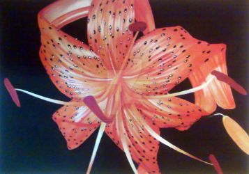 Tiger Lily by JulianArsenique