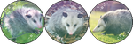 Possums! [Divider] (Request) by I-Stamps