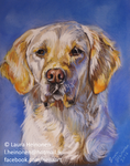 Golden Retriever in Pastels by Hei-La