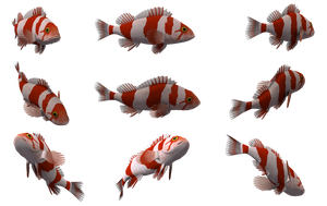 Fish Set 15 by Free-Stock-By-Wayne