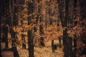 In the woods V by MoonKey19