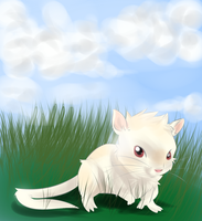 Neve the almost albino gerbil by RipSpawn