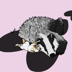Badger and Kitten by Dragimal