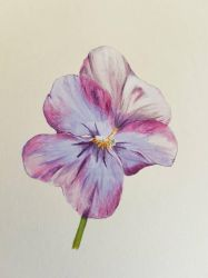 Pansy by DetailsMatter