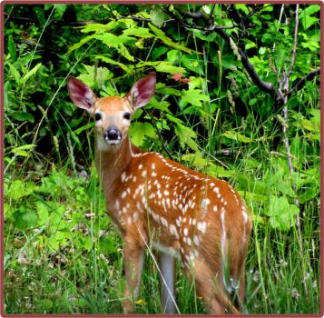 fawn by bydandphotography